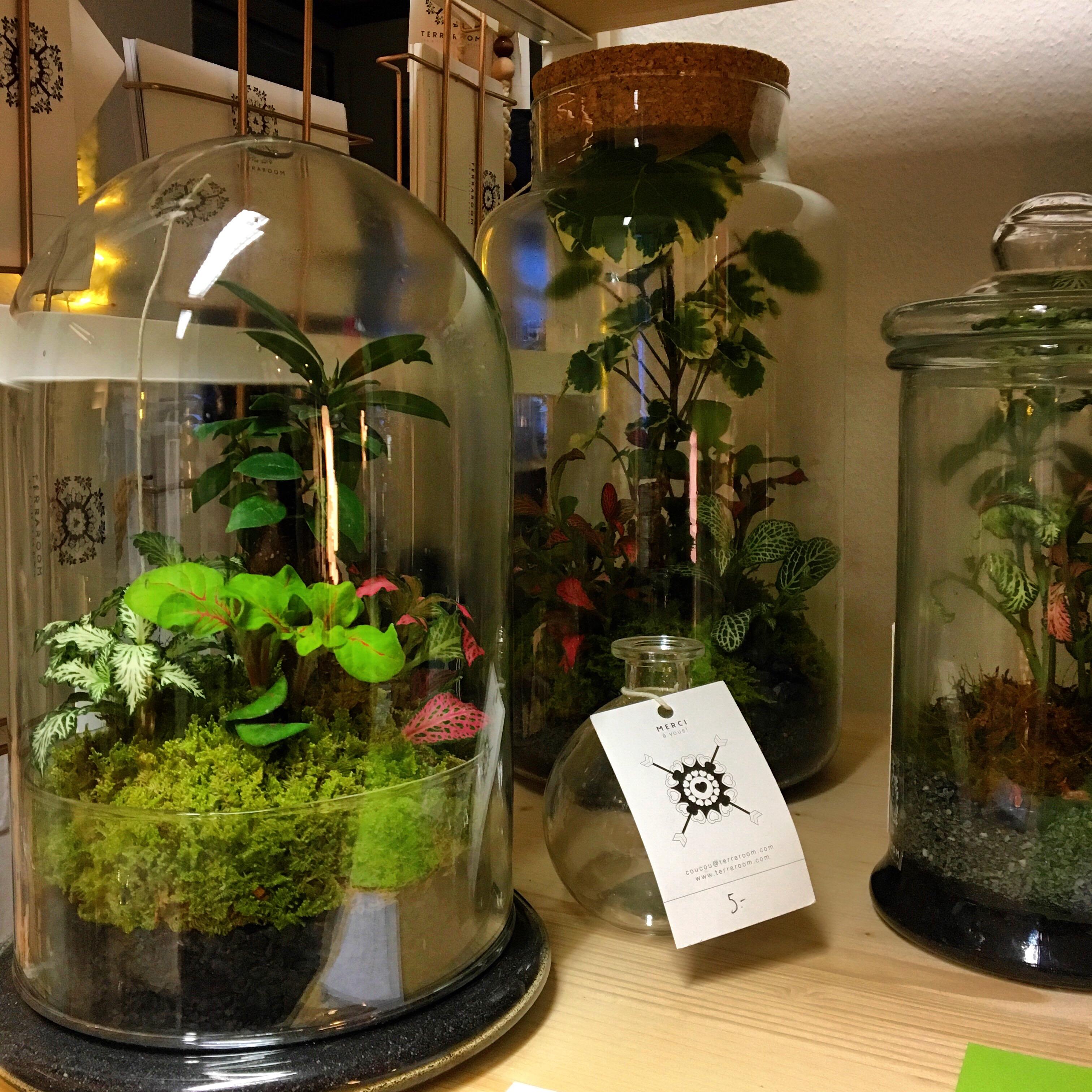 Terrarium Fermé Plante Grasse terrariums - cloches sur mesure